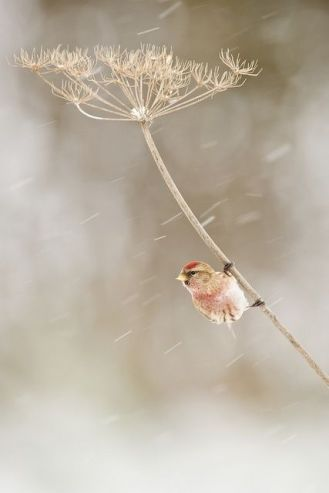 oiseau-dans-le-vent