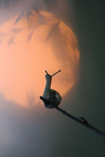 escargot-lune