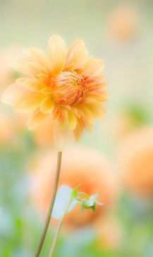 nature-fleur-orange
