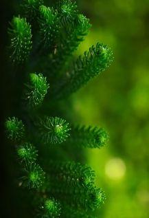 nature-pin