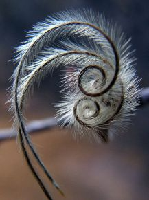 nature-spirales