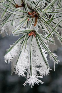 pin-neige