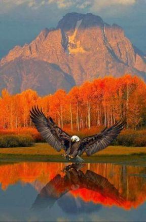aigle-action