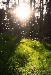 soleil-attractivité