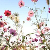Magnétisme et cancer : quelques constats