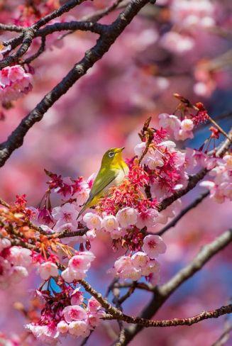 paix-printemps-quietude