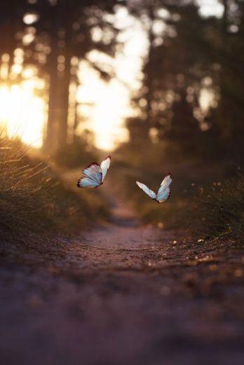 aventure-papillons