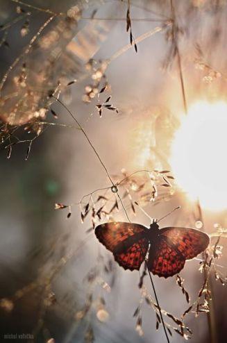 papillon-ouveture
