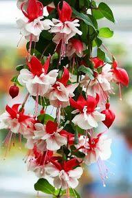 cascade-fleurs