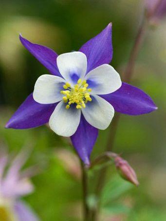 fleurs-5-petales
