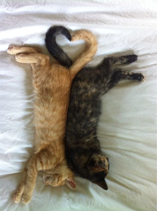 chats-amour
