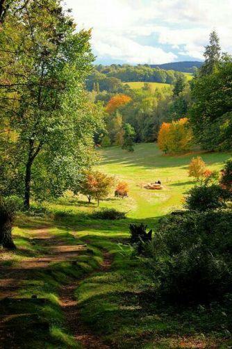 ecosysteme-forestier