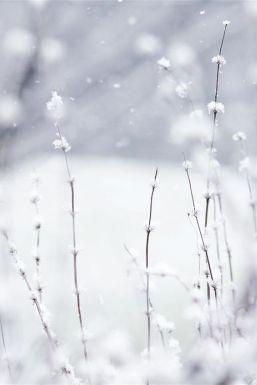 jardin-neige