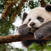 Kung Fu : on n'est pas des pandas !