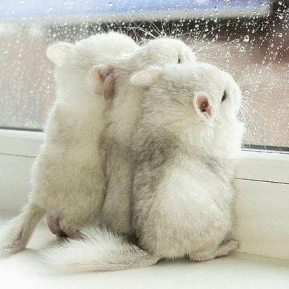 souris neige