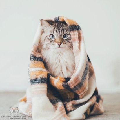 chat-couverture