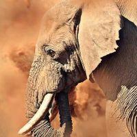 Message des éléphants à l'humanité - 24/06/19