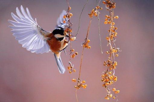 bird-1045954_640