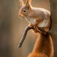 Le cadeau de l'écureuil